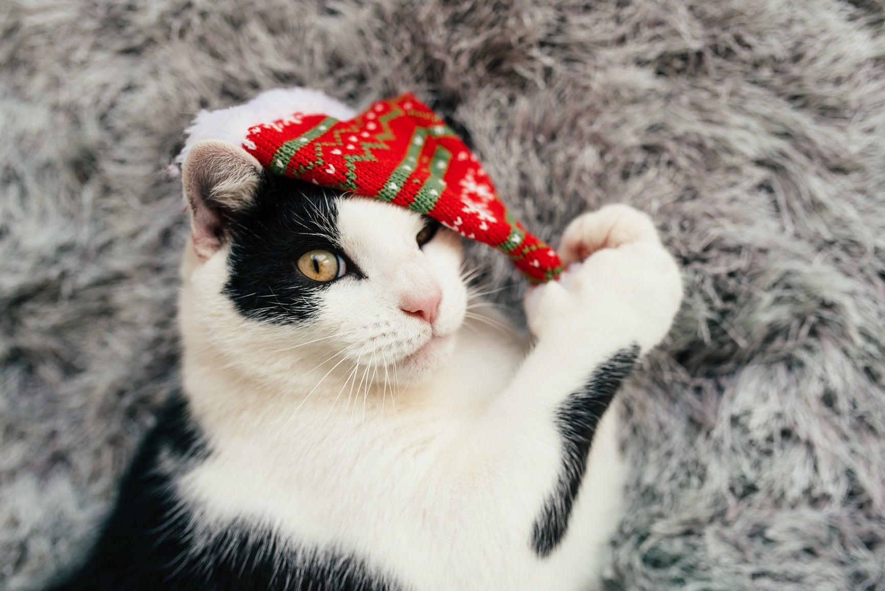 Holiday Kitty